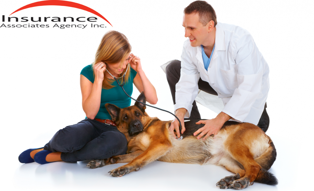 Veterinary Business Insurance West Chester, OH